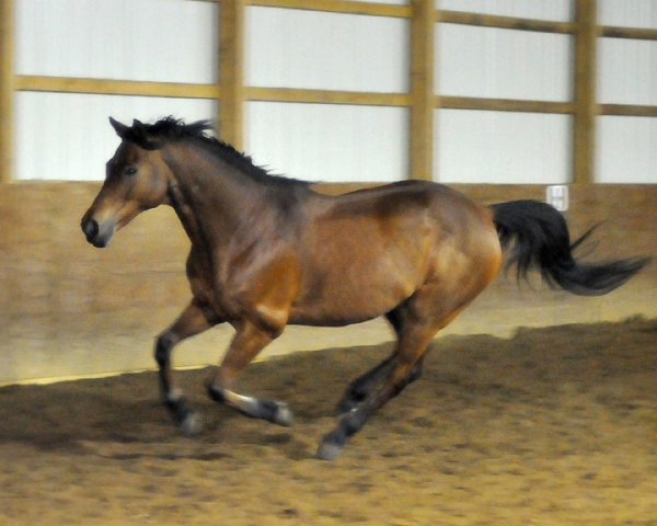 canter2