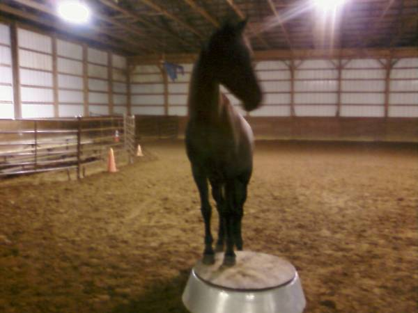 Mary on the Pedestal (taken by a camera phone)